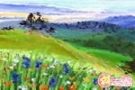 雏菊花语代表什么 雏菊的传说