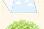 一棵绿萝七个鬼只是谣言 种植绿萝有哪些禁忌