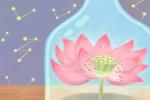 百花之王 牡丹花花语传说