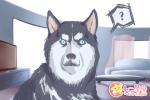 狗看见鬼有几种表现 狗见鬼的传闻
