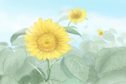 家里再穷也要养这3种花 植物风水