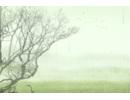 屋前种什么树最旺风水 屋前种树风水解析