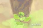 院内种什么树好风水 植物风水作用解析