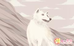 怎么给白色的小狗取名字 纯白狗狗起名