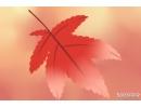 贴秋膘是什么意思 贴秋膘的来历是什么