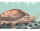 养龟为什么不能养双 为什么养龟双数是大忌