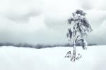 立冬和冬至什么区别 各是什么意思