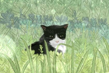 梦到猫说话是什么意思 有什么预兆