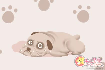 女人梦到狗死了是什么意思 有何含义