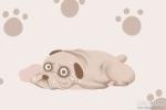 梦到狗狗是什么意思 有什么寓意