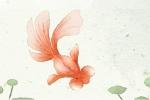 胎梦梦到鱼是什么意思 有什么含义