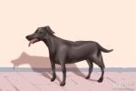梦到一群狗是什么意思 有什么预兆