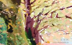 梦到树是什么意思 有什么寓意