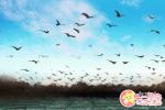 做梦梦到龙在天上飞是什么意思