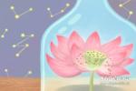养什么花招财并聚财 八种植物招财又旺宅