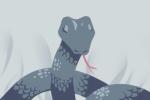 做梦梦到蟒蛇是什么意思 预示着什么