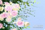 女人梦见桃花开了代表什么 有什么寓意
