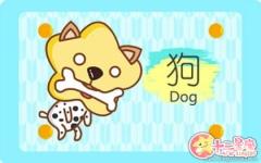 属狗的克星 属狗和什么属相不合