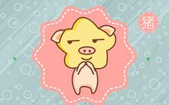 属猪的人恋爱中的臭毛病 说得就是你