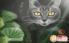 遇见死猫不吉利是真的吗 破坏风水吗