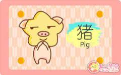 属猪的是哪年出生的 运势怎么样