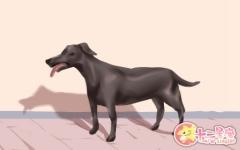 梦见狗死了是什么预兆 有什么寓意
