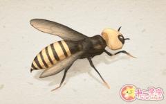 女人梦见自己被蜜蜂蛰代表什么意思