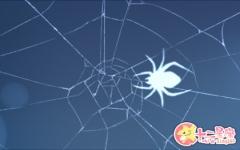 女人梦见蜘蛛是胎梦吗 有什么预兆