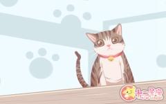 男人梦见猫是什么征兆 寓意好不好
