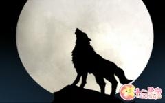 女人梦见狼是什么意思 有什么预兆