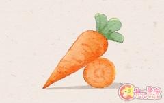女人梦见很多胡萝卜意味着什么 寓意好不好