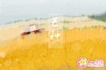 芒种吃什么民间传统食物 芒种的民俗文化