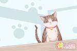 女人梦见喂东西给猫吃是什么意思
