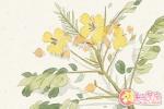 女人梦到各种各样的花是什么意思 预示什么