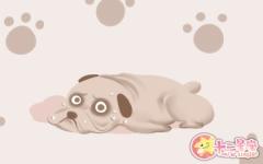 梦见养狗是什么意思 有什么征兆