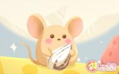 梦见养老鼠是什么意思 有什么预示