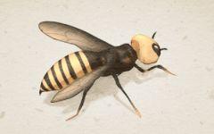 梦见许多虫子是什么意思 有什么征兆