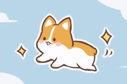 小狗名字有创意 好听的宠物名字