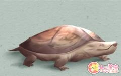 做梦梦到乌龟特别大是什么意思 预示什么