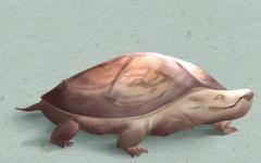 孕妇梦见乌龟是胎梦吗 有什么预示