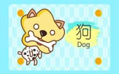 2021年生肖狗幸运色 穿什么颜色比较吉利