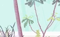 植树节种的都是什么树 种什么树合适