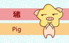 属猪人的命运分析 属猪的人每月出生的不同命运