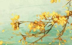 家里最旺财的十种花 十大寓意吉利的花