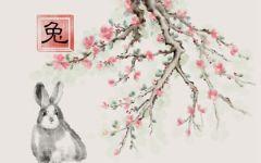 属兔最佳婚配是属啥 和什么属相合
