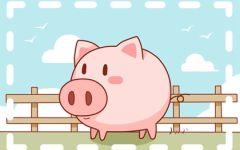 2021年属猪人适合做什么工作 吉星帮衬事业顺心
