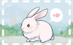 属兔几点出生最好女孩 亥时出生的属兔女才华横溢