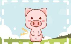 属猪人命里带二婚吗 有什么说法