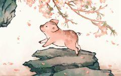 属猪人最苦命出生时辰 几点生的属猪人最辛苦