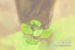 南红玛瑙原石图片欣赏,南红玛瑙原石图片大全